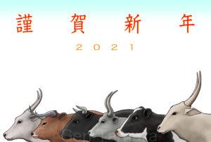 2021年 年賀状 丑年 Adobe Stock イラスト : タムラゲン ( タムラ・ゲン )